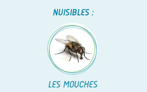 services indesirable mouches